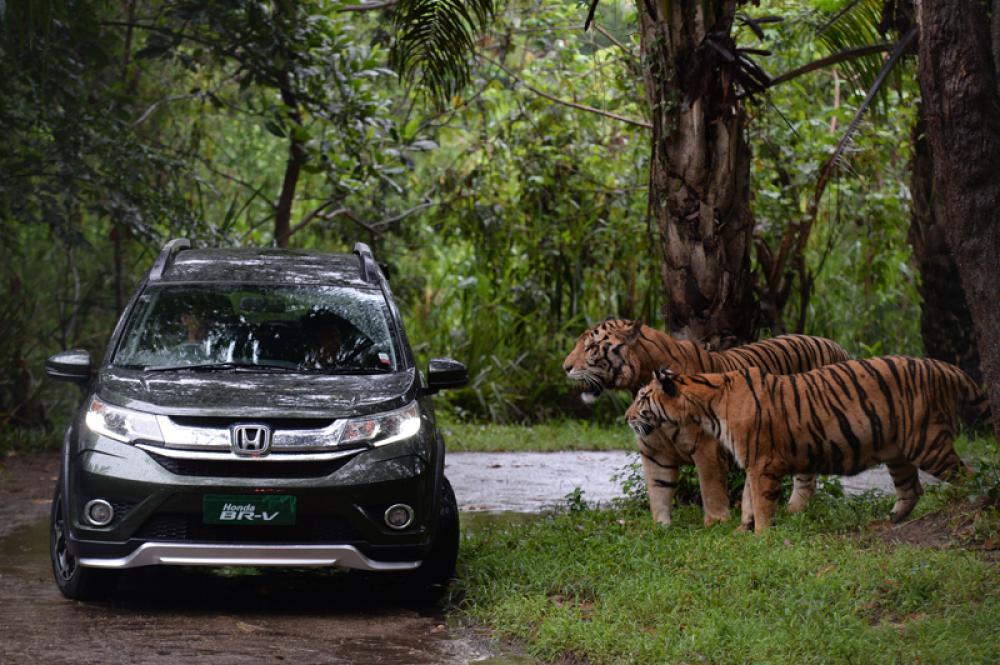 Honda Studi Terus, Kapan CR-V, Jazz, Mobilio, BR-V Terbaru Hadir Sih?