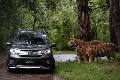 Komentar Honda Soal Anggapan Mobilio dan BR-V Makin Dilupakan