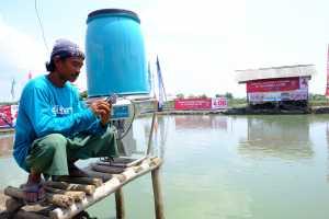 Di Indramayu, Budidaya Ikan Bisa Lewat Ponsel