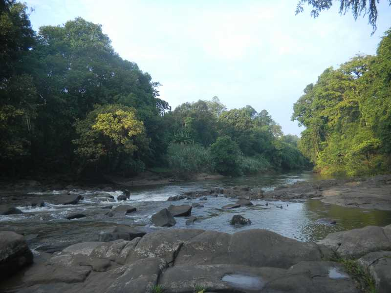 5 Fakta Tentang<i>Heart of Borneo</i>, Inisiasi dari Indonesia-Malaysia-Brunei