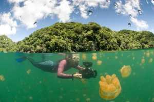 Berburu Foto Bawah Air yang Unik Bersama Ubur-Ubur di Danau Kakaban