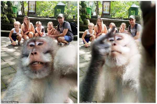 Kocak, Kera di Bali Ini <i>Ngajak Selfie</i> Turis