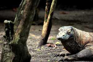 Penutupan Taman Nasional Komodo Baru Sebatas Wacana?