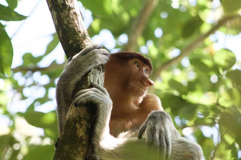 <i>Gak</i> Cuma Hutan, ini 4 Destinasi Seru di Kalimantan Utara