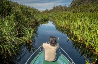 Tanjung Puting Tawarkan Sensasi Susur Sungai Seperti Amazon