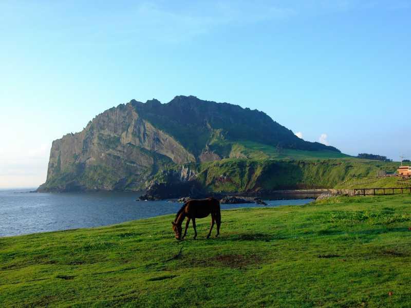 5 Pilihan Wisata Alam di Pulau Jeju Korea Selatan