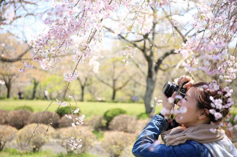 Jangan Lakukan Ini Saat Berkunjung ke Korea di Musim Semi