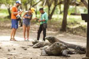 Tahun Depan Taman Komodo Ditutup Setahun, Karena Turis?