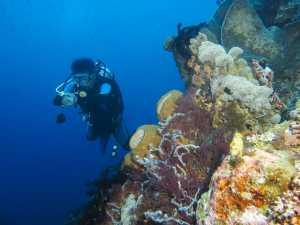 Taman Laut Olele, Surga Tersembunyi di Gorontalo