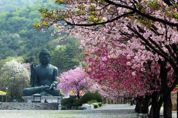 Chungnam-do, Provinsi di Korea dengan Pemandangan Eksotis