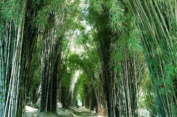 5 Destinasi Wisata Alam Terbaik di Surabaya