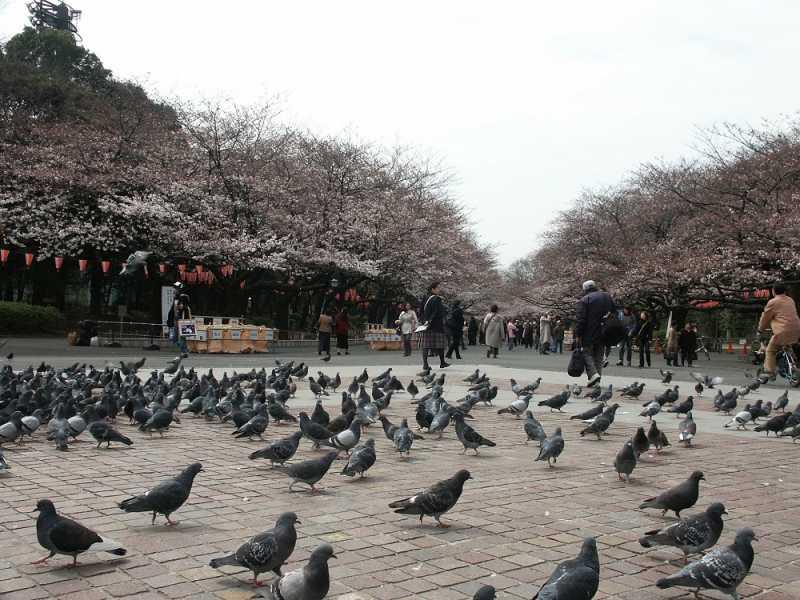 Liburan ke Jepang, Ini 5 Fakta Tentang Ueno Park di Tokyo