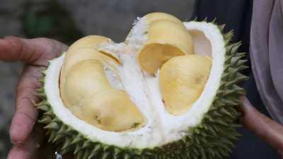 Satu Menit, 80 Ribu Durian Thailand Ludes di Online Shop