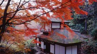Ingin Melihat Indahnya Daun di Musim Gugur, Yuk ke Kanagawa!