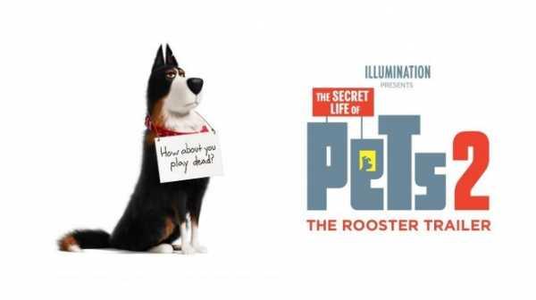 The Secret Life of Pets 2, Cinta Tanpa Syarat Seekor Anjing ke Majikan