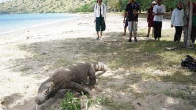Status Pulau Komodo Ditutup Belum Jelas