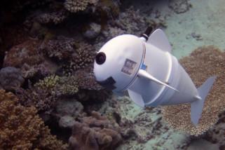 Kenalkan SoFi, Robot Ikan Pintar