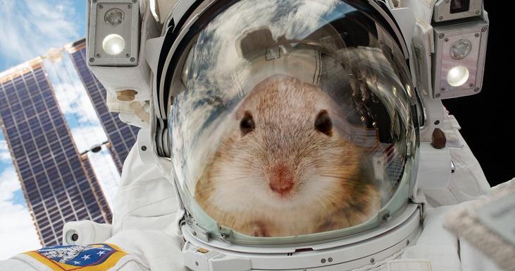 NASA Bawa 20 Tikus ke Luar Angkasa, Untuk Apa?