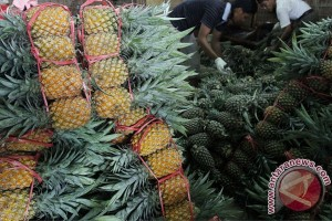 Nanas Segar Asal Lampung Bakal Masuk Pasar China Mulai Tahun 2020