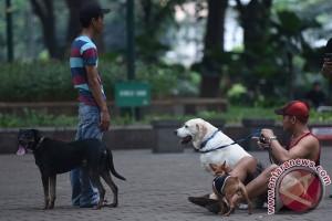 Pelihara hewan bagus untuk jantung