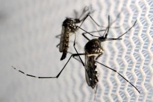 Ilmuwan Uji Kemampuan Zika Bunuh Sel Kanker