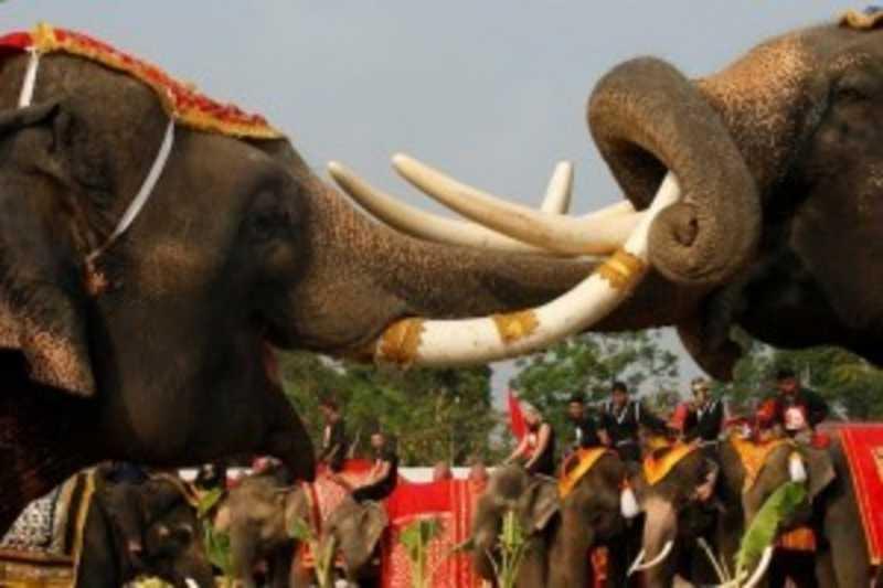 Makan Prasmanan Rayakan Hari Gajah Thailand