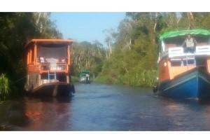 Wisata petualangan di Tanjung Puting