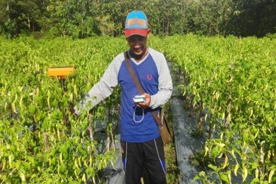 Aplikasi Mertani Bantu Petani Pantau Tanaman Lewat Ponsel