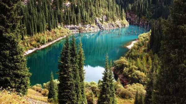 Fenomena Unik, Pohon Cemara Tumbuh Terbalik di Dalam Danau
