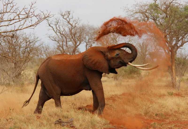 Karena Kelaparan, Gajah Liar Ini Begal Truk Kentang
