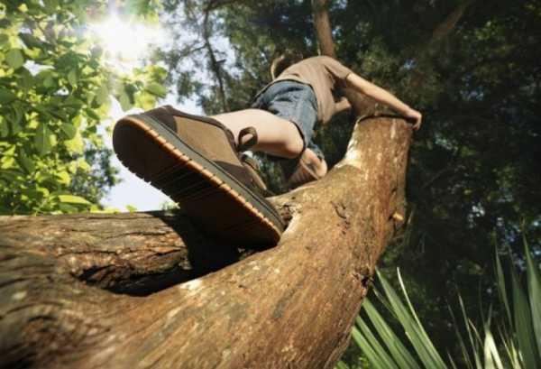 Memanjat Pohon Dapat Meningkatkan Daya Ingat