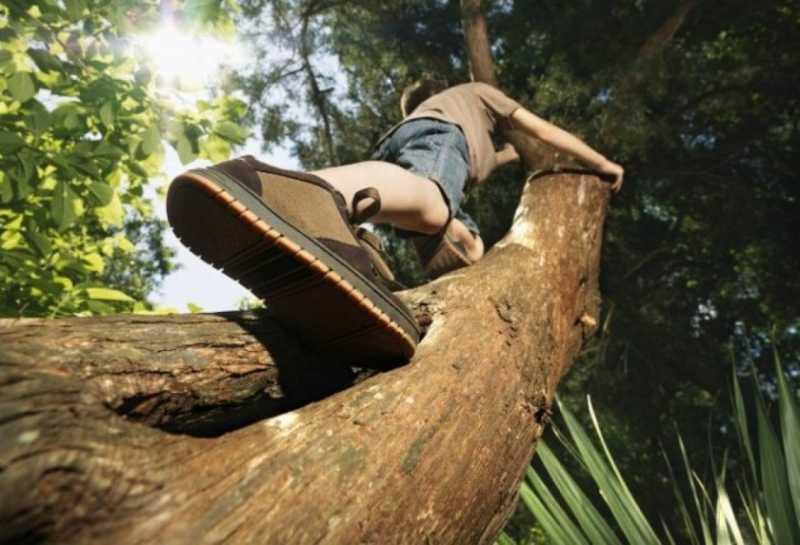 Ternyata Memanjat Pohon Dapat Meningkatkan Daya Ingat