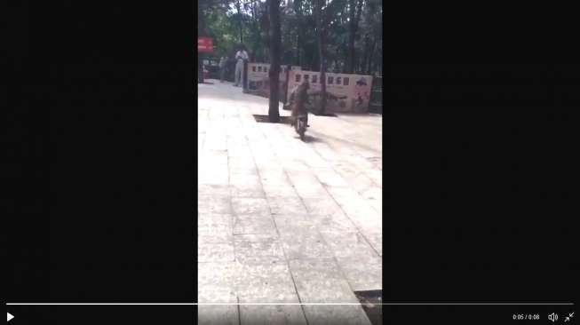Masih Terkait Tiang Listrik, Video Monyet Kecelakaan Ini Bikin Ngakak