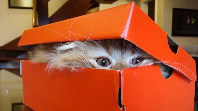 5 Jenis Kucing Ini Harganya Setara Rumah Mewah