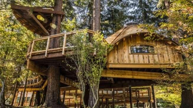Unik, Microsoft Dirikan Rumah Pohon untuk Karyawan