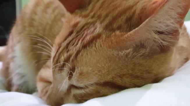 Terungkap! Misteri Pembunuh Sadis Ratusan Kucing