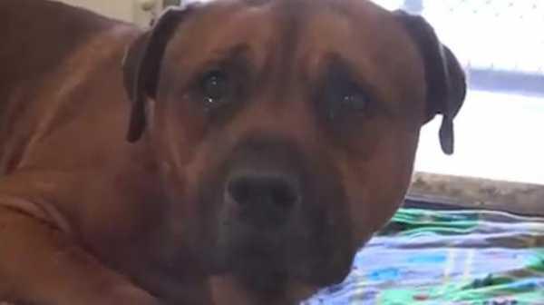 Ditinggal Majikan Selamanya, Anjing Ternyata Bisa Depresi