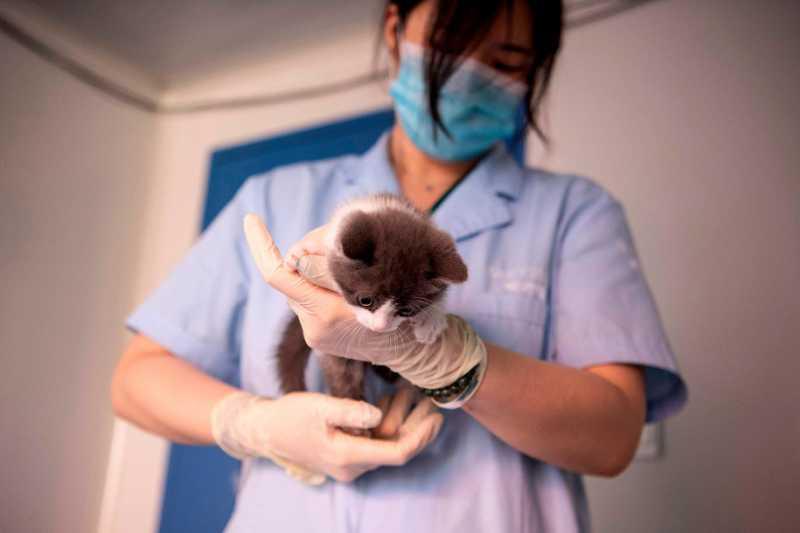 Ilmuwan China 'Hidupkan' Lagi Kucing Mati