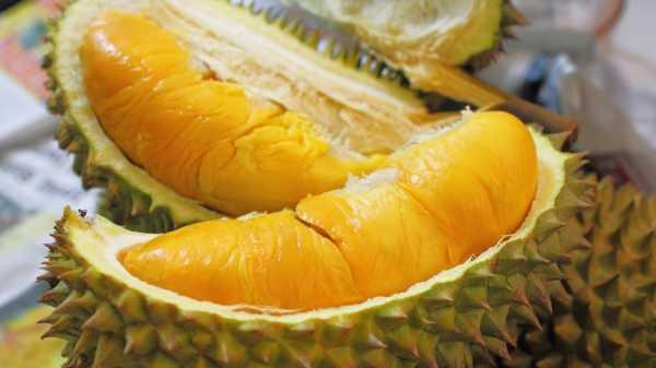 Jangan Salah Pilih Durian, Ini Tipsnya