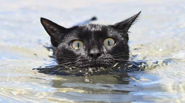 Nathan, Kucing Menggemaskan yang Gemar Berenang di Pantai