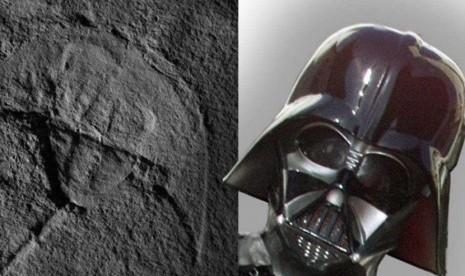 Fosil Kepiting Purba Ini Mirip Darth Vader