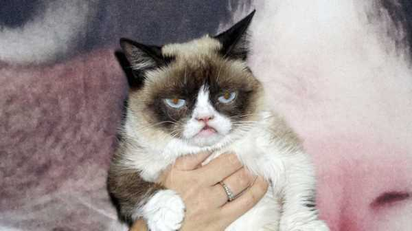 Grumpy Cat, Si Kucing Berwajah Cemberut Itu, Meninggal....