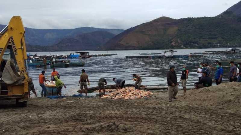 Kualitas Air Buruk, Ratusan Ton Ikan di Samosir Mati