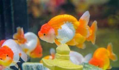 Hotel di Belgia Tawarkan Sewa Ikan untuk Tamu Kesepian