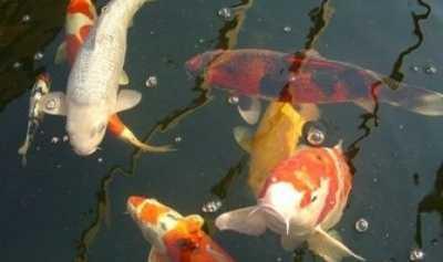 Kolam Air Mancur DPRD Rp 620 Juta akan Diisi Ikan Koi