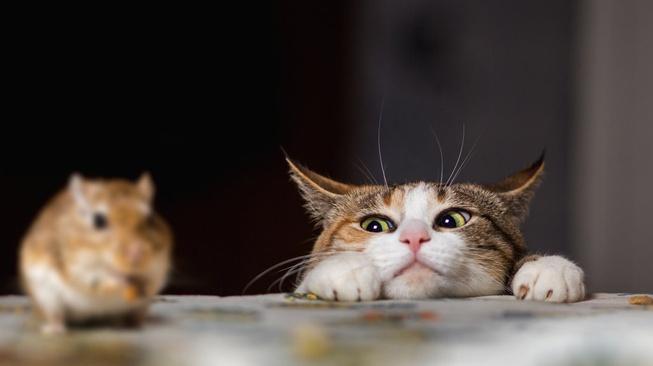 Kucing Ternyata Tak Efektif Jadi Musuh Tikus