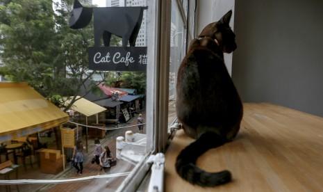 Jepang Miliki Kafe Kucing di Atas Kereta