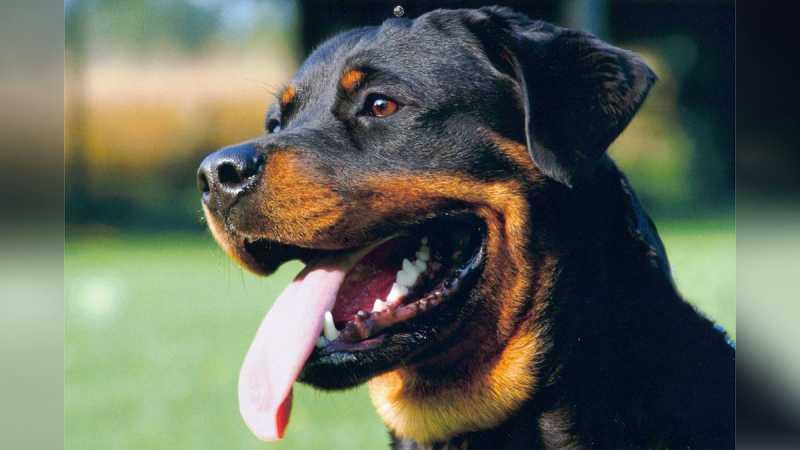 Jilatan Anjing Bikin Kaki dan Tangan Pria di AS Infeksi dan Diamputasi