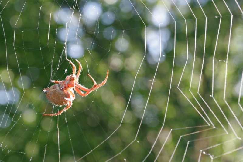 Ini Alasan Sebaiknya Tidak Membunuh Laba-laba