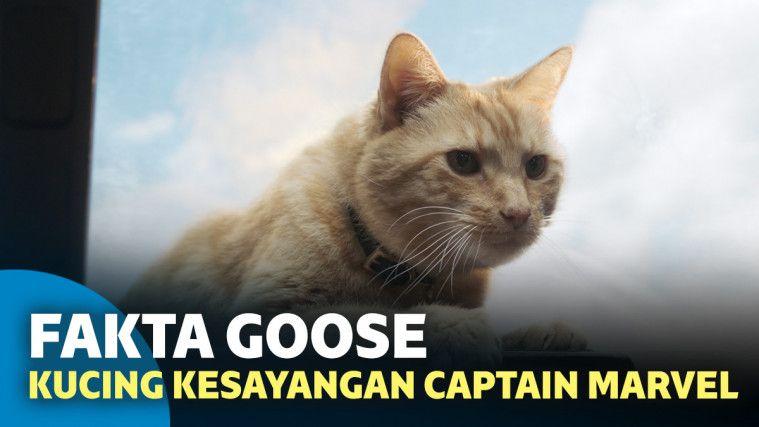 6 Fakta Mengenai Goose, Kucing Kesayangan Captain Marvel